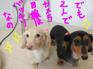 snap_emudog_2013120211214.jpg