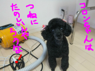 snap_emudog_20131220127.jpg