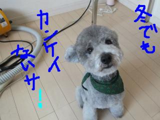 snap_emudog_201312221291.jpg