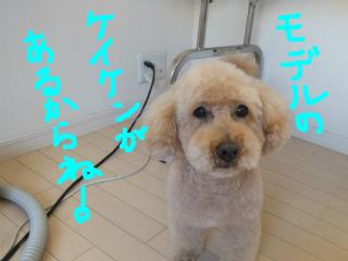 snap_emudog_2013122233238.jpg