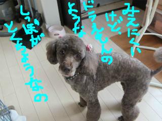 snap_emudog_201312623466.jpg