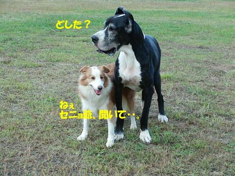 CIMG7410.jpg
