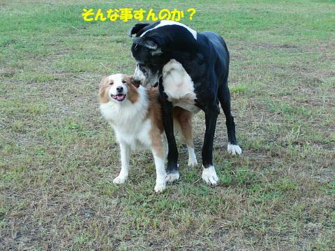CIMG7411_20100930093437.jpg