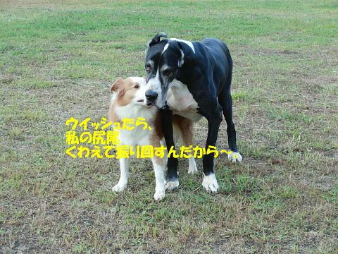 CIMG7412_20100930093437.jpg