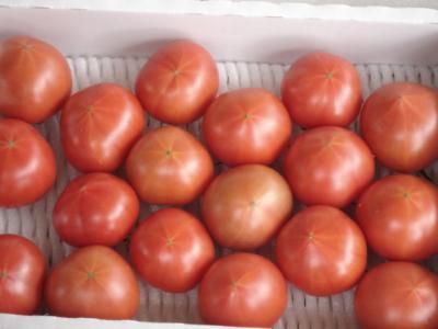 美味しいトマト♪