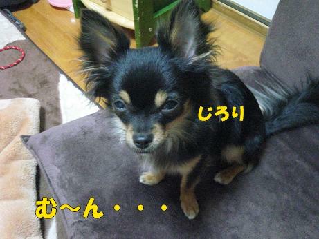 動画 010