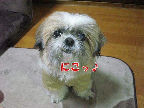動画 005