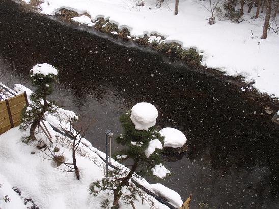 雪の帽子をかぶる木。かわいー