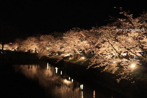夜桜@松本城