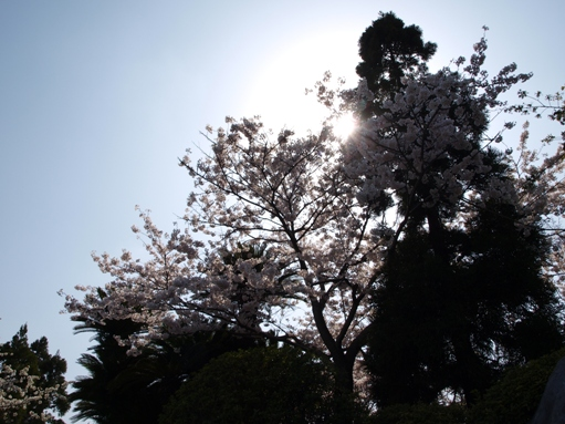 お花見2011 (10)