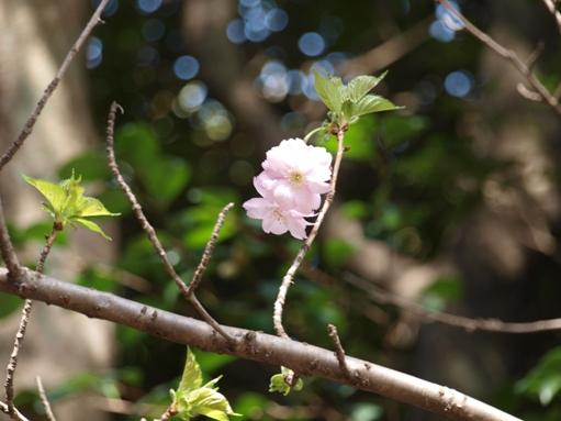 お花見2011 (3)