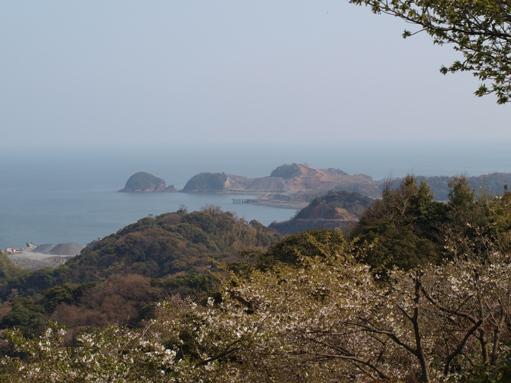 お花見2011 (9)