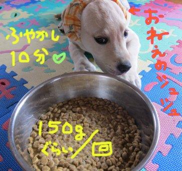 コピー ~ パピー2010 004
