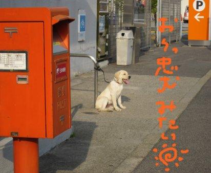コピー ~ パピー2010 091