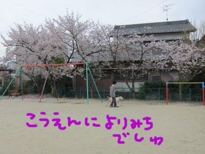 コピー ~ パピー2010 010