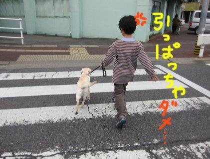コピー ~ パピー2010 006