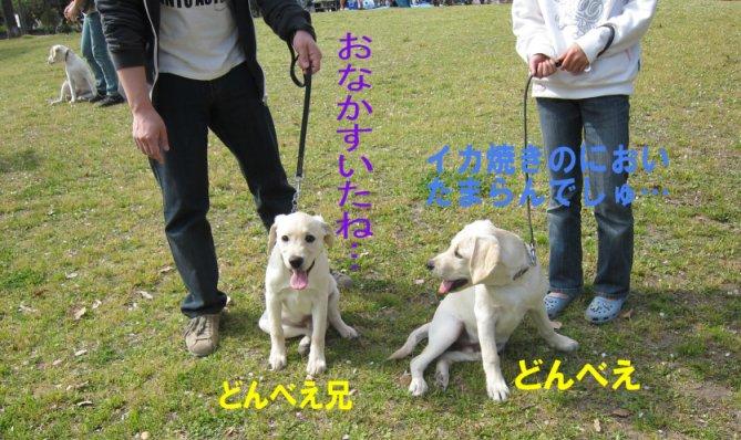 コピー ~ パピー2010 059