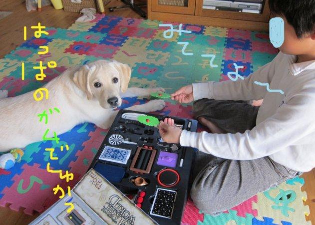 コピー ~ パピー2010 005