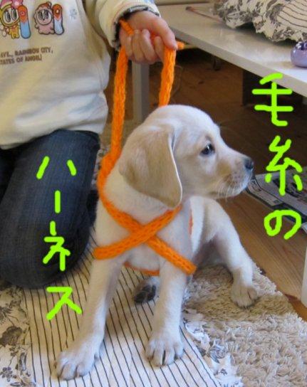 コピー ~ パピー2010 003