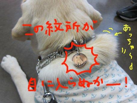 コピー ~ パピー2010 009