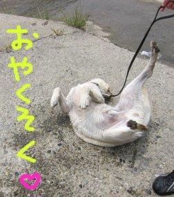 コピー ~ パピー2010 106