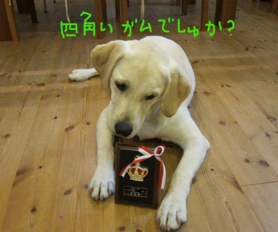 コピー ~ パピー2010 064