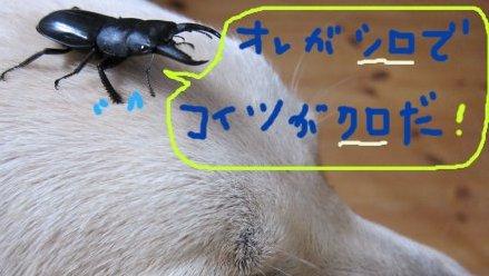 コピー ~ パピー2010 002