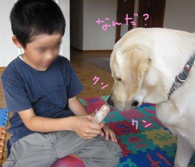 コピー ~ パピー2010 041