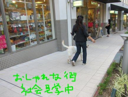 コピー ~ パピー2010 042
