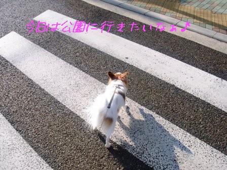 横断歩道を渡ろう