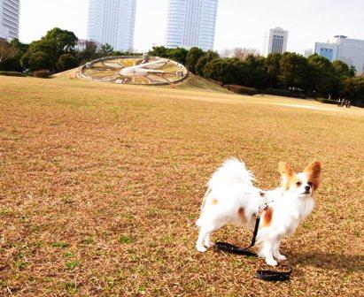 久しぶりの公園1