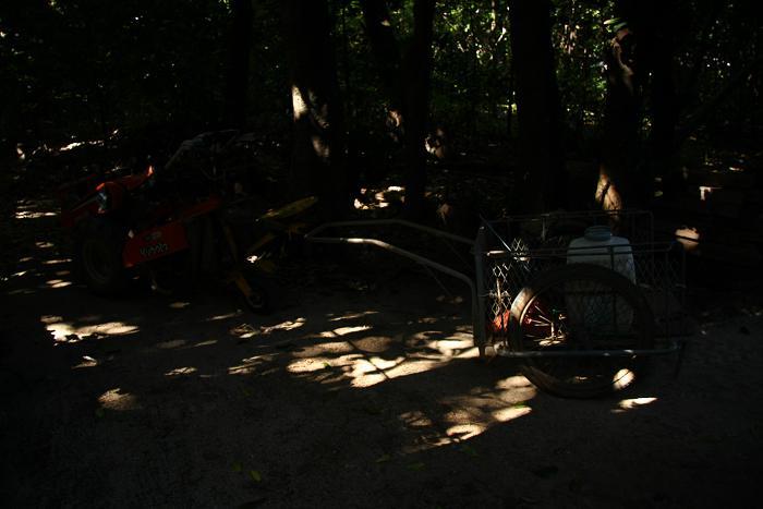 備瀬のフクギ並木、4