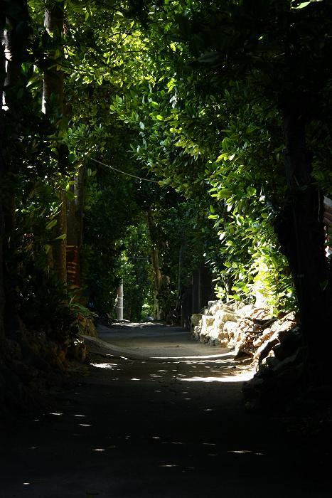 備瀬のフクギ並木、5