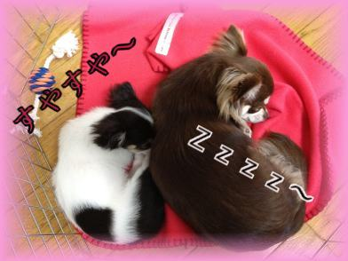 ひめ&ひなちゃん