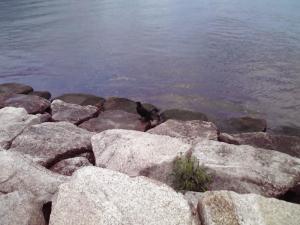 琵琶湖のからすさん(その1)