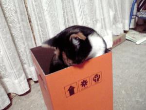 箱入り娘(こね)