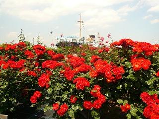 朱色のバラと氷川丸