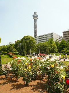 白バラとマリンタワー
