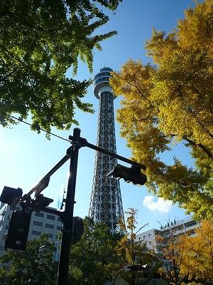 紅葉した銀杏とマリンタワー