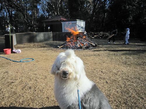 焚火とセド