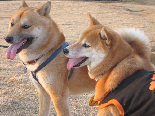 クリン&太郎