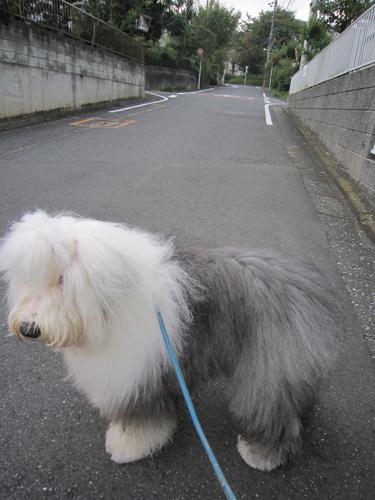 お散歩出発!