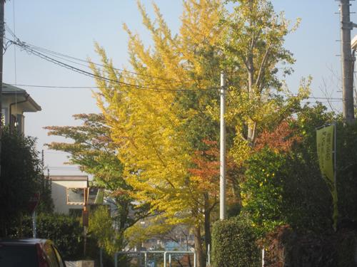 椿峰の秋色