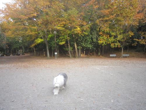 椿峰中央公園
