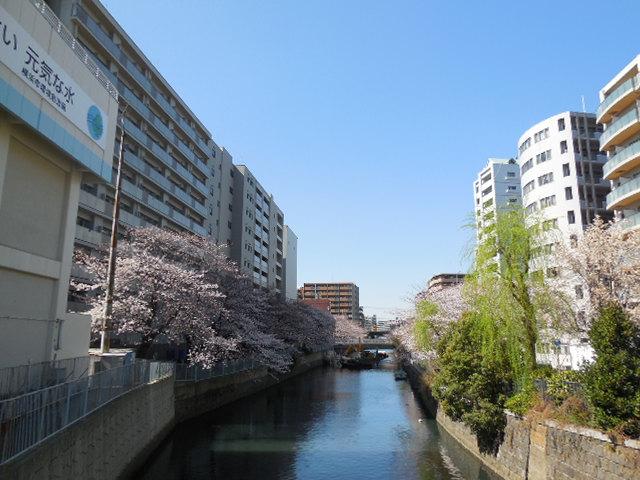 2013sakura2