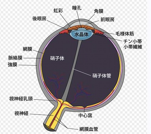 s-iris.jpg