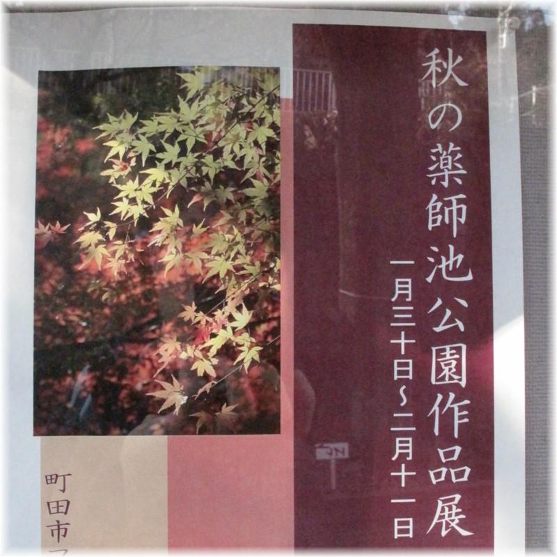 130211G 010薬師秋
