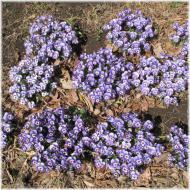130316G 049青紫