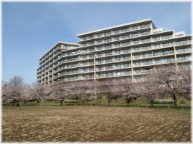 130323G 026円形広桜