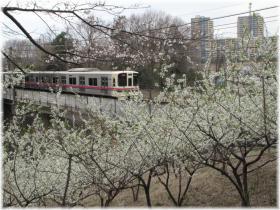 130323G 051ふれ森桜電車